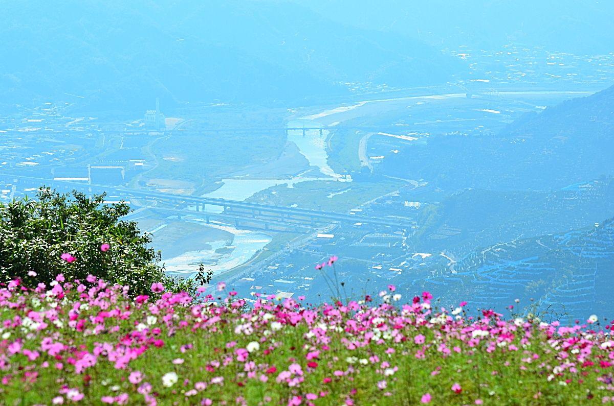 3.100万本のコスモス!和歌山「鷲ヶ峰コスモスパーク」