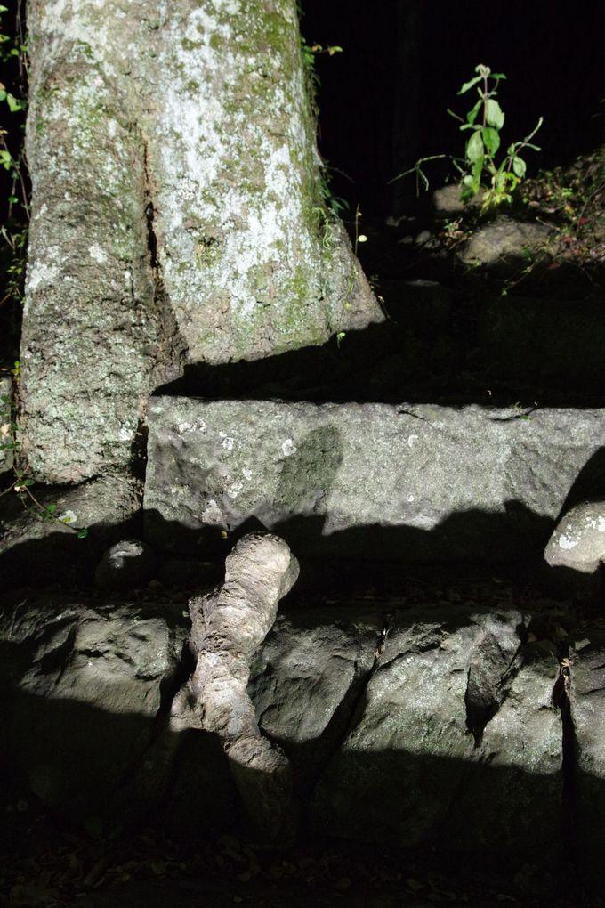 「ナニコレ珍百景」で紹介されたあの木も!