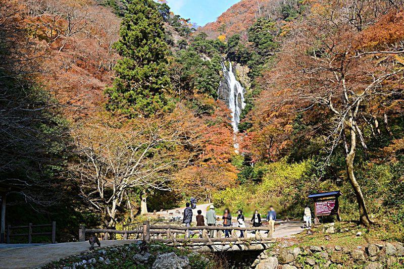 野生のニホンザルに会えるかも?岡山「神庭の滝自然公園」で紅葉を満喫!