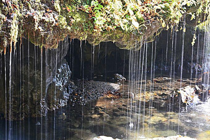滝までの遊歩道でマイナスイオンを満喫