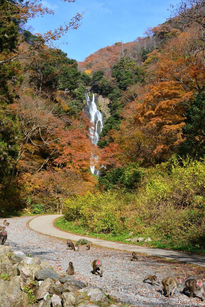 青空と滝と紅葉を入れて撮ってみたい