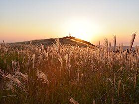 ススキの大海原・和歌山「生石高原」で夕日と星空を楽しもう!
