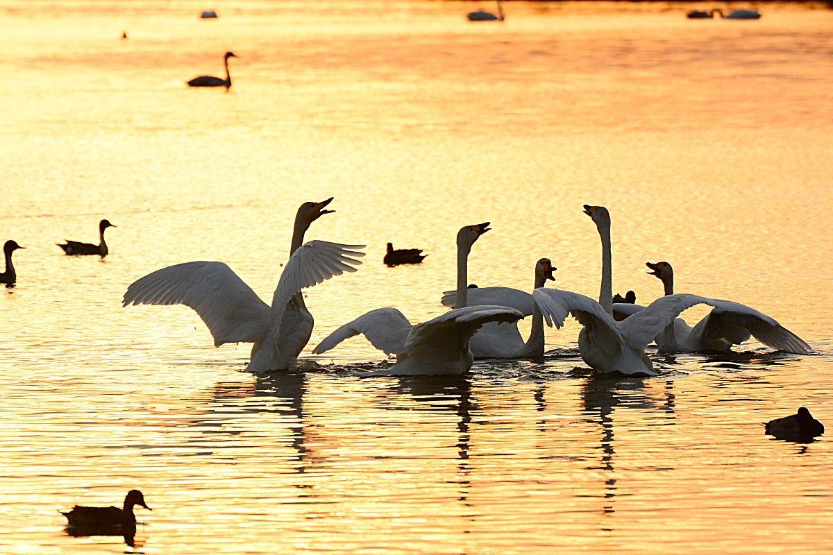 2.米子水鳥公園