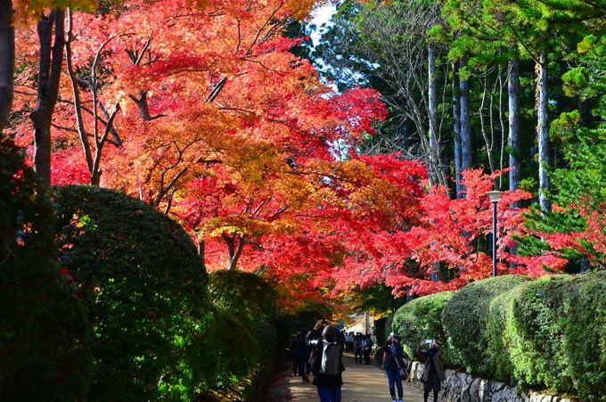イチオシ「壇上伽藍」の紅葉