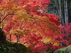 天空の聖地・和歌山「高野山」で紅葉を愛でよう!