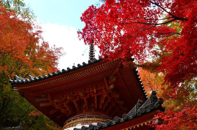 境内の建造物と紅葉の調和も見逃せない
