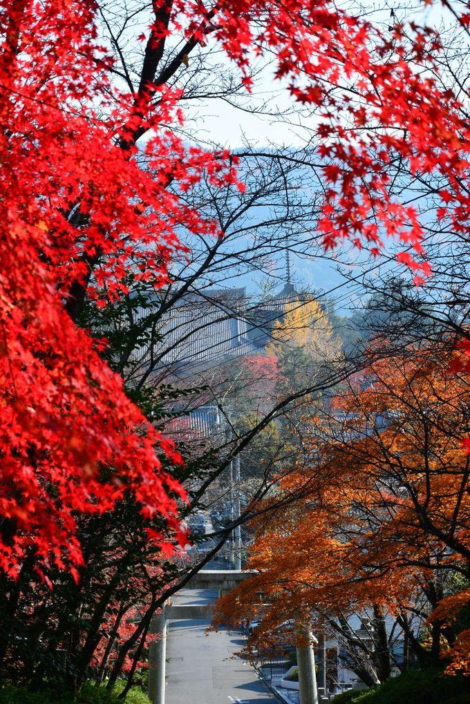 金戒光明寺から真如堂を通って吉田神社に抜けるルートもおすすめ