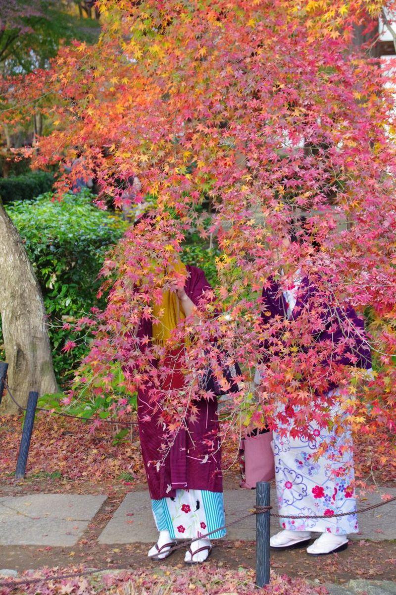 """京都の紅葉のフィナーレ・本堂裏の""""散り紅葉""""は必見"""