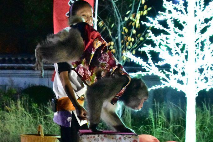 神戸モンキーズ劇場の「日本伝統芸能猿まわし」も楽しみたい