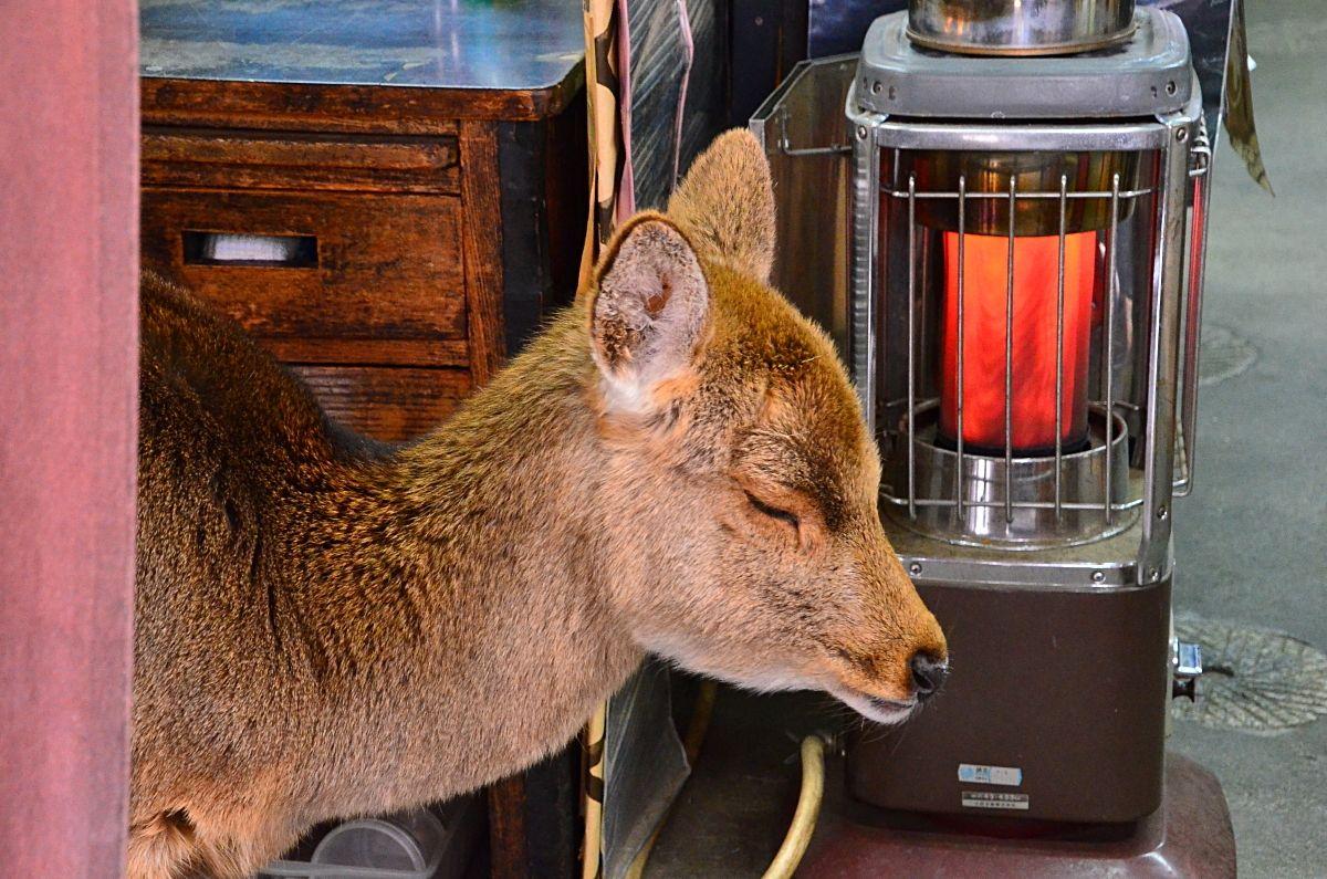 奈良公園の鹿はヒーリング効果満点