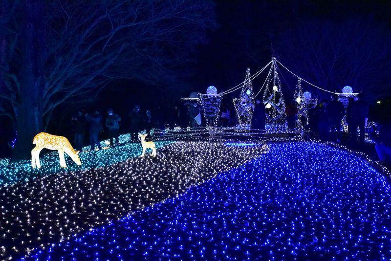 奈良公園を包む瑠璃色の光「しあわせ回廊なら瑠璃絵」に行こう!