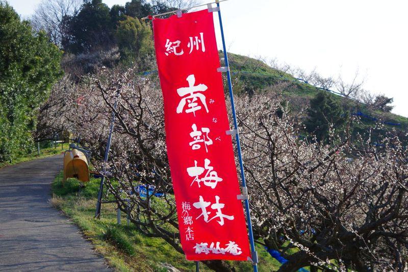日本一の梅の里を満喫できる遊歩道