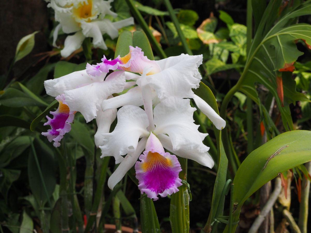 花の文化園のシンボル「大温室」も必見