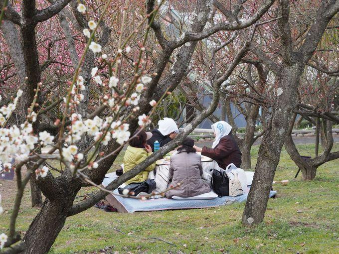 花の文化園で恒例の「ウメコタ」とは