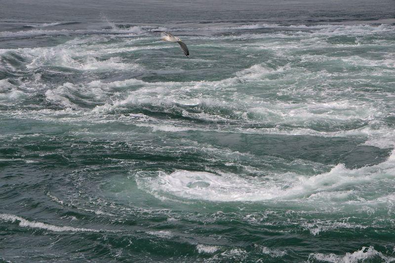 春のロンド!遊覧船「咸臨丸」で鳴門海峡に渦潮を見に行こう