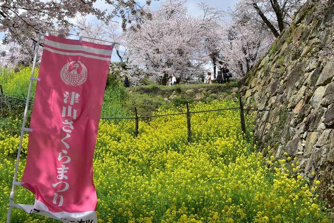 津山藩の初代藩主は、信長の近習の「森蘭丸」の弟