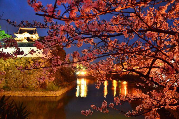 幻想的でロマンチックな岸和田城と桜のライトアップ