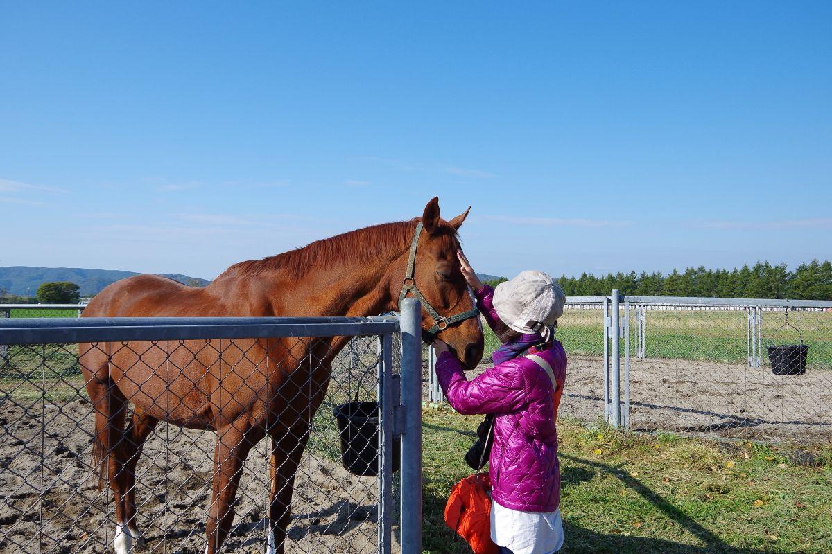 ツアーでイチオシ「乗馬厩舎」の見学