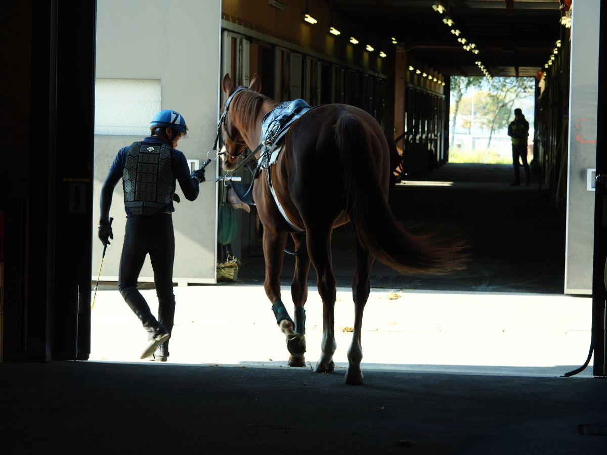 乗馬厩舎の光景は、まるで映画のワンシーンのよう