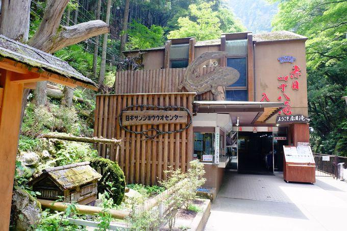 滝の入り口は「日本サンショウウオセンター」