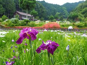 奈良・剣聖の里「柳生」で花しょうぶと柳生家ゆかりの地へ!