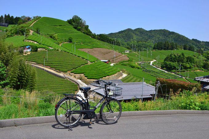 和束町を代表する「石寺の茶畑」とは