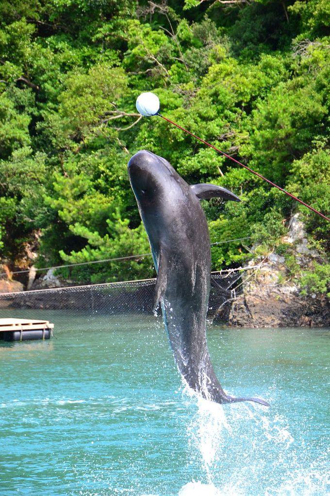 ダイナミックなパフォーマンスの「クジラショー」