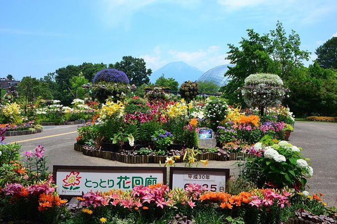 2日目午後:JR米子駅から特急やくも&新幹線で帰ろう