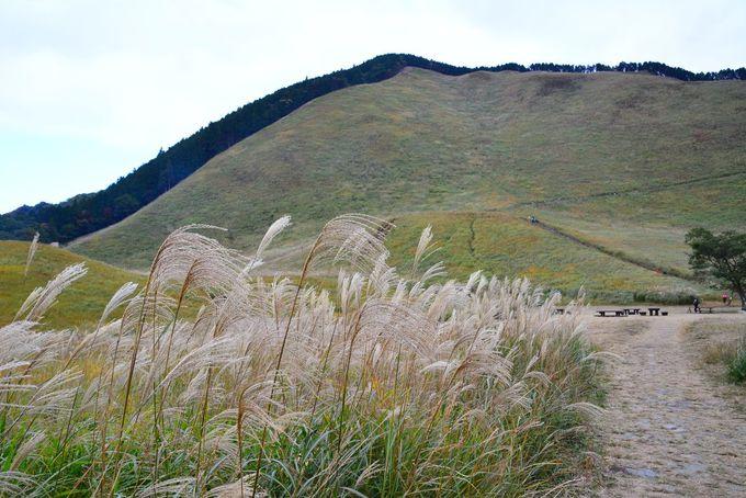 曽爾高原でハイキングを楽しもう