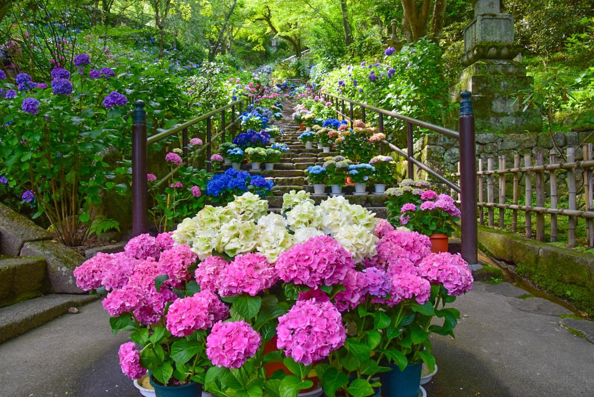 梅雨の時期には清涼感あふれるあじさいの花も