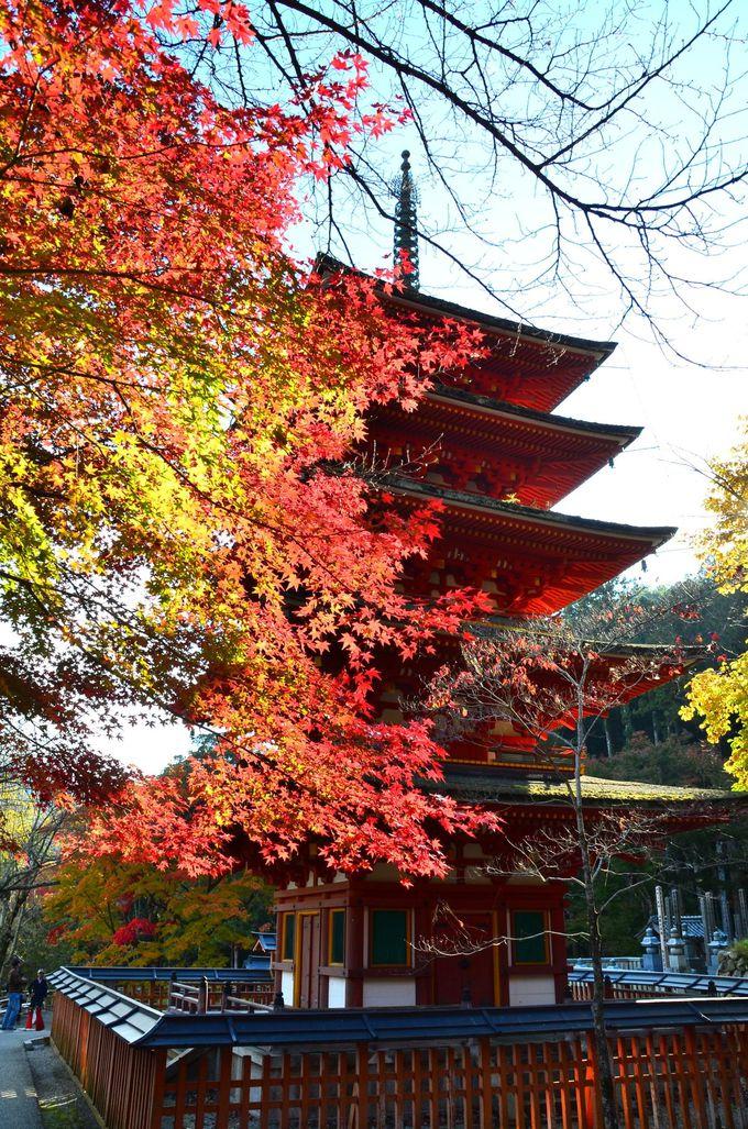 均整のとれた五重塔や本坊からの紅葉も素晴らしい