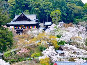 桜に牡丹に紅葉!奈良・花の御寺「長谷寺」で四季の風情を満喫