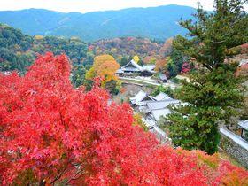 2019年はどこに行く?奈良の紅葉スポットおすすめ12選