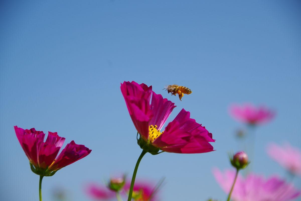 ミツバチやシジミチョウなどの観察も楽しみ
