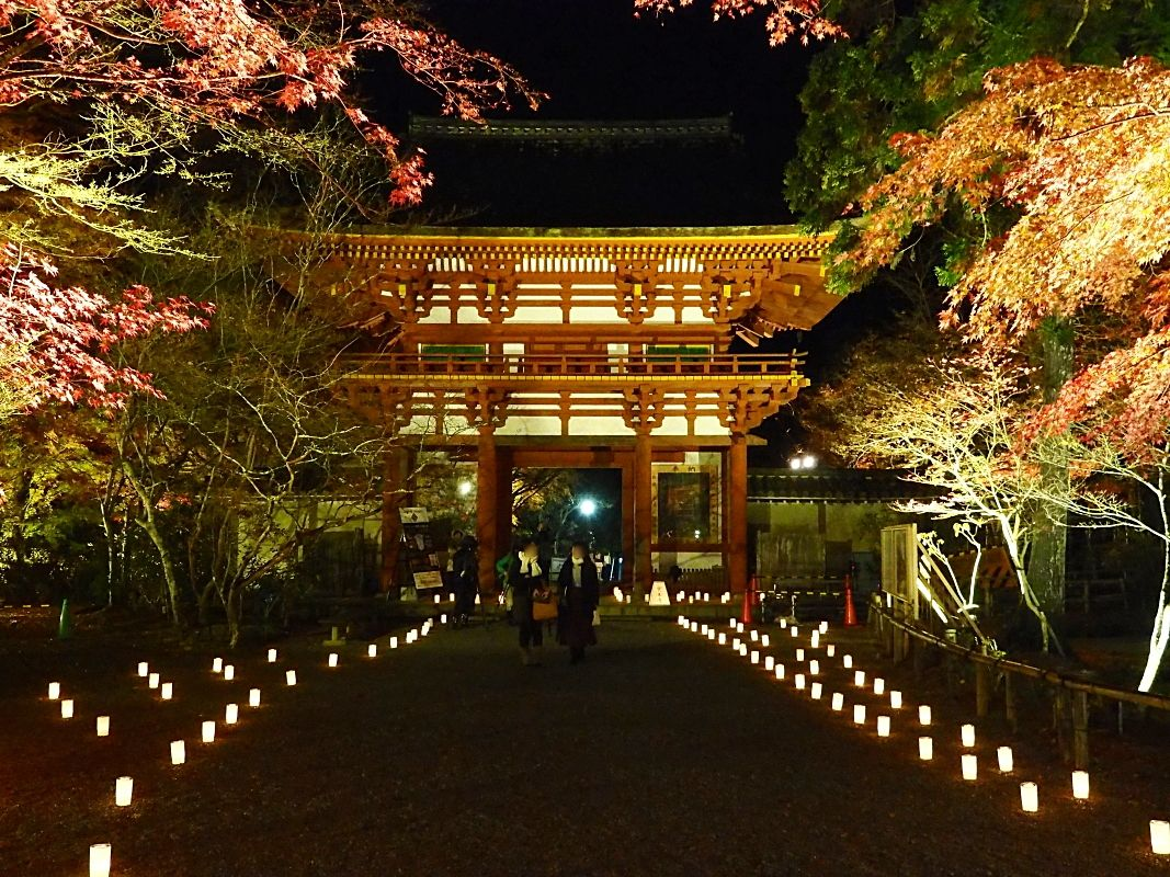 奈良・女人高野「室生寺」でもみじ祭りと紅葉ライトアップを満喫!