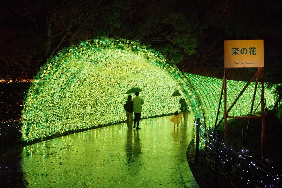 もうひとつの光のトンネル「菜の花」で幸せな気分に浸ろう