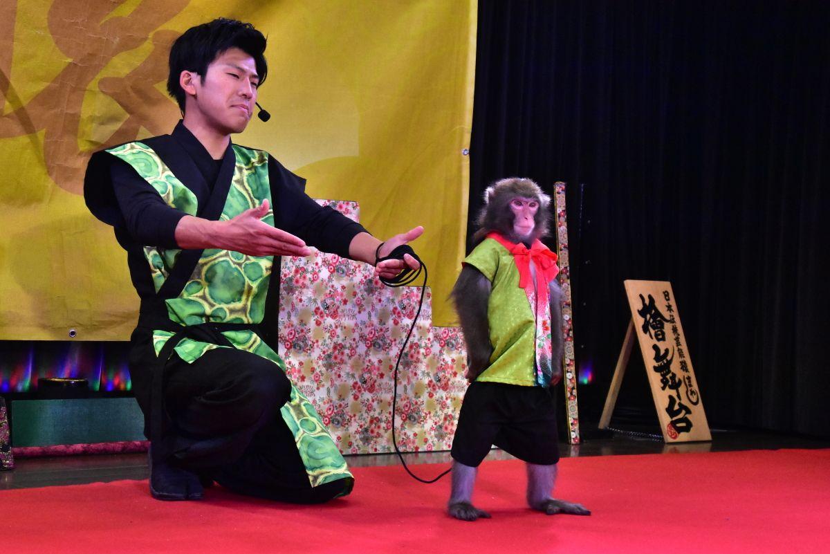 """「通天閣猿まわし劇場」で""""日本伝統芸能猿まわし""""を"""