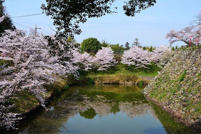 郡山城跡の桜オススメの撮影スポットは