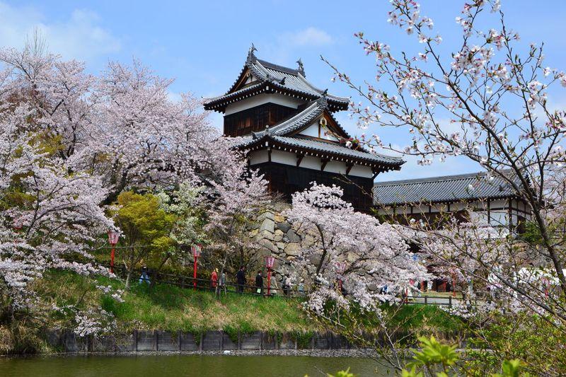 桜に時代行列や和太鼓の演奏も!奈良「大和郡山お城まつり」