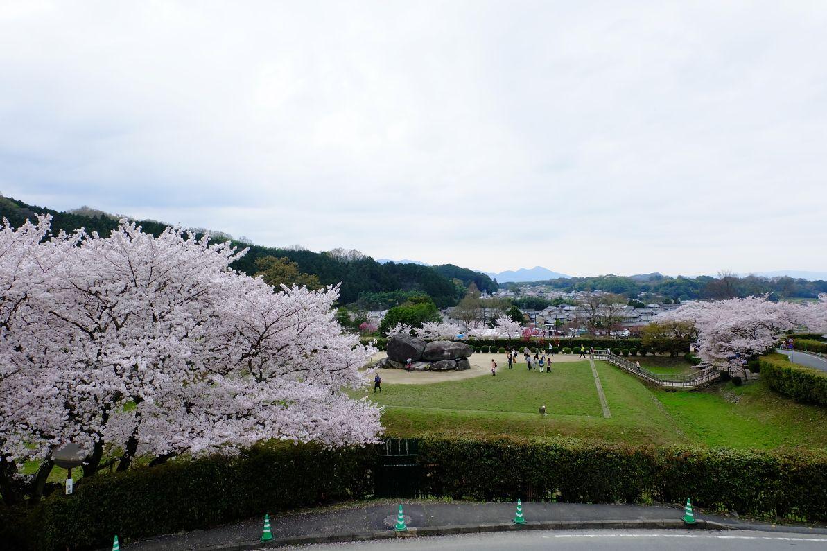 石舞台古墳の日中の桜も見逃せない