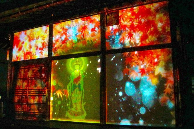初めて体感する未知の花見スタイル「川原寺 幻桜の夜」