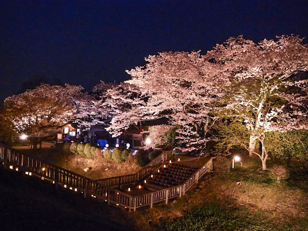 桜の花びらのなかで漆黒に浮かぶ「石舞台古墳」