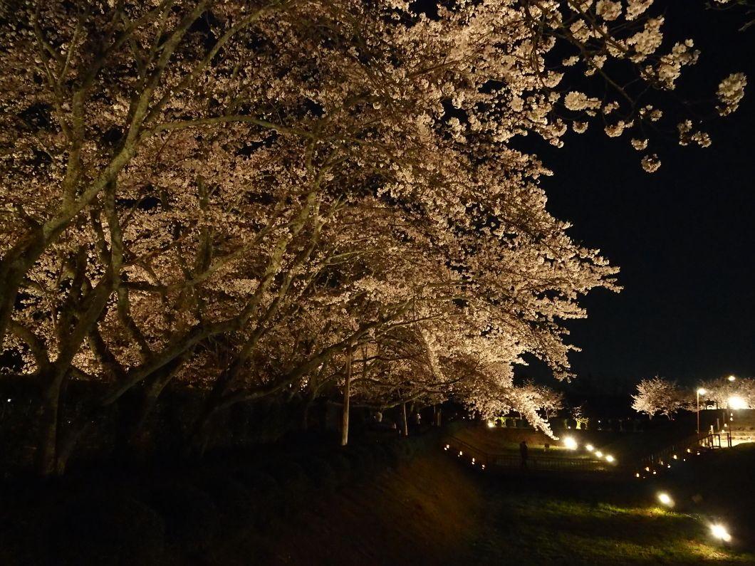 石舞台古墳や桜を背景に「古代衣装体験」を楽しもう