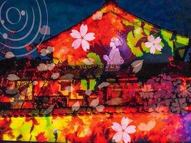 幽玄の世界へ!奈良・石舞台夜桜ライトアップと川原寺・幻桜の夜