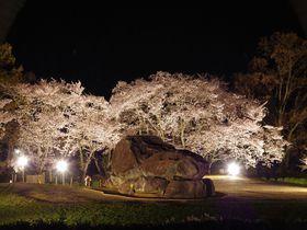 夜桜ライトアップは幽玄の世界!奈良・明日香「石舞台古墳」でお花見