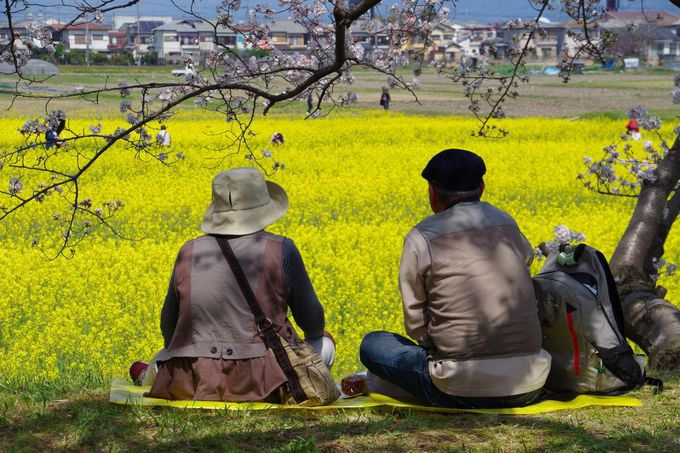 菜の花園からは三輪山やJR桜井線の電車も