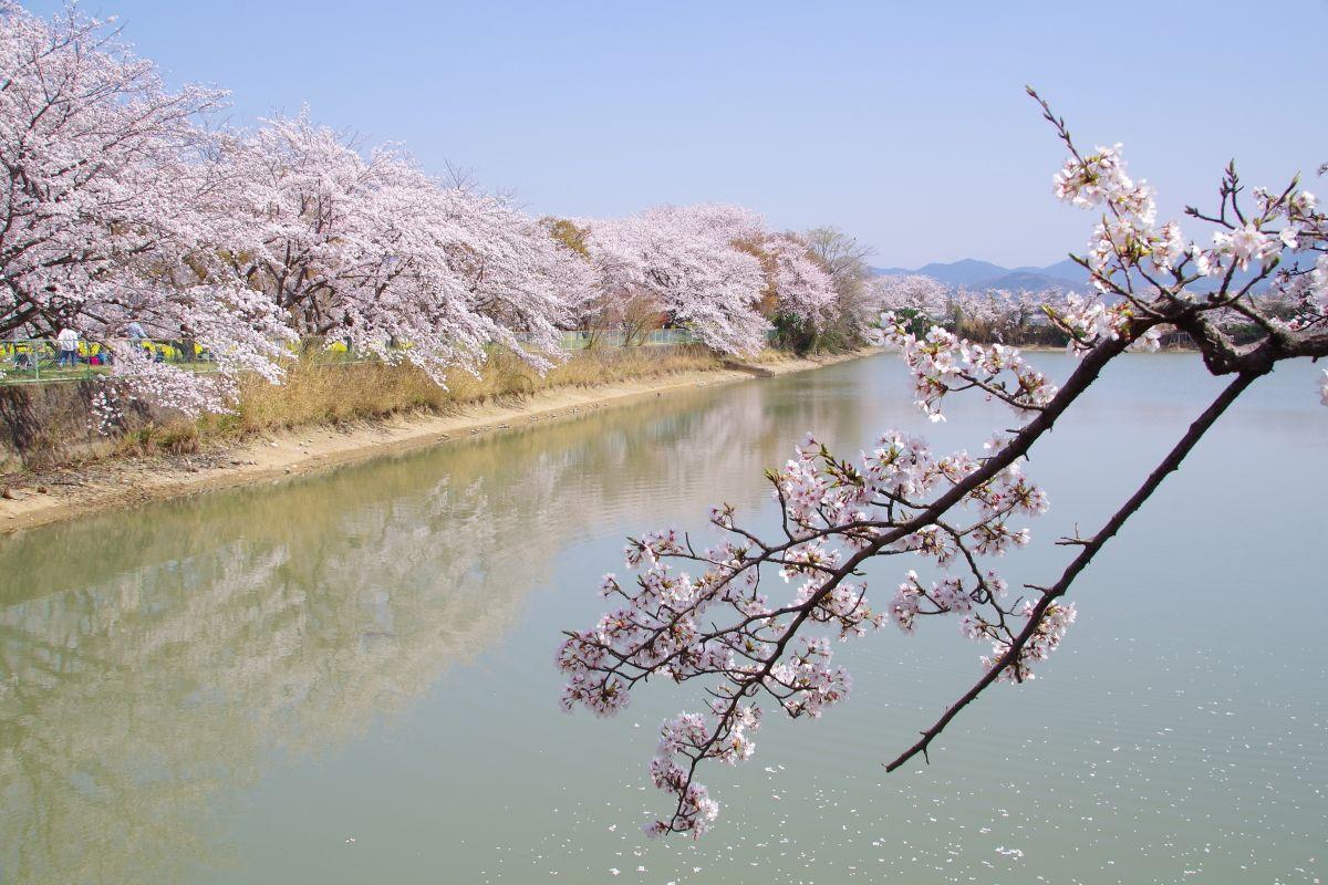 悲しい歴史を秘めた「醍醐池」