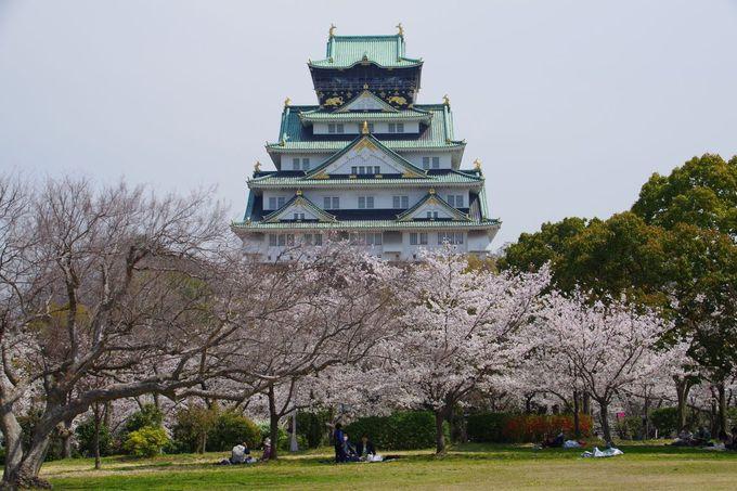 大阪城でイチ押しの桜のフォトスポット「西の丸庭園」