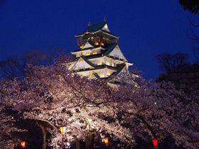 夜桜ライトアップに日本伝統芸能猿まわし!「大阪城公園」でお花見