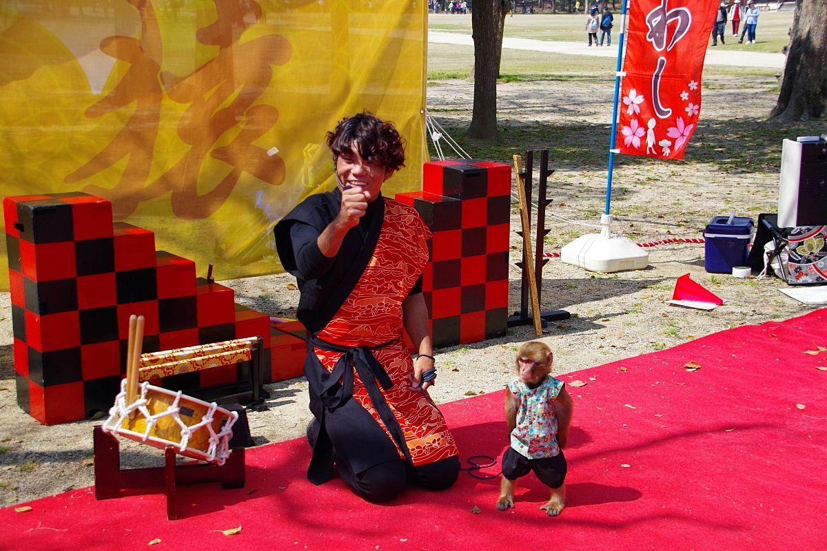 大阪城 西の丸庭園で「日本伝統芸能猿まわし」を楽しもう
